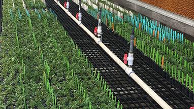 Greenhouse 4 image