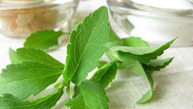 stevia 4 iamge